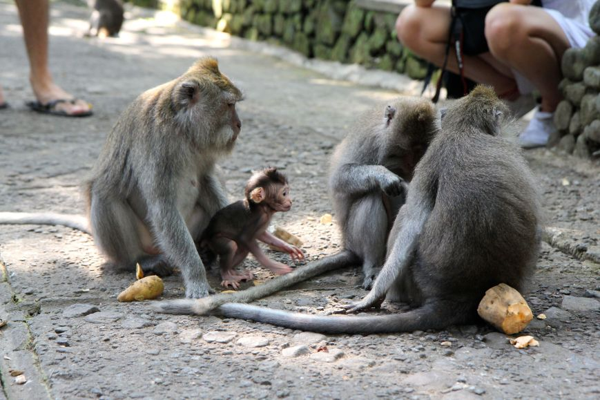 Group living with a baby monkey